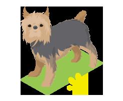 Pet_Profile
